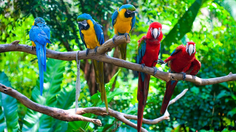 afbeelding papegaaien