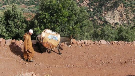 Rifgebergte berber man met ezel